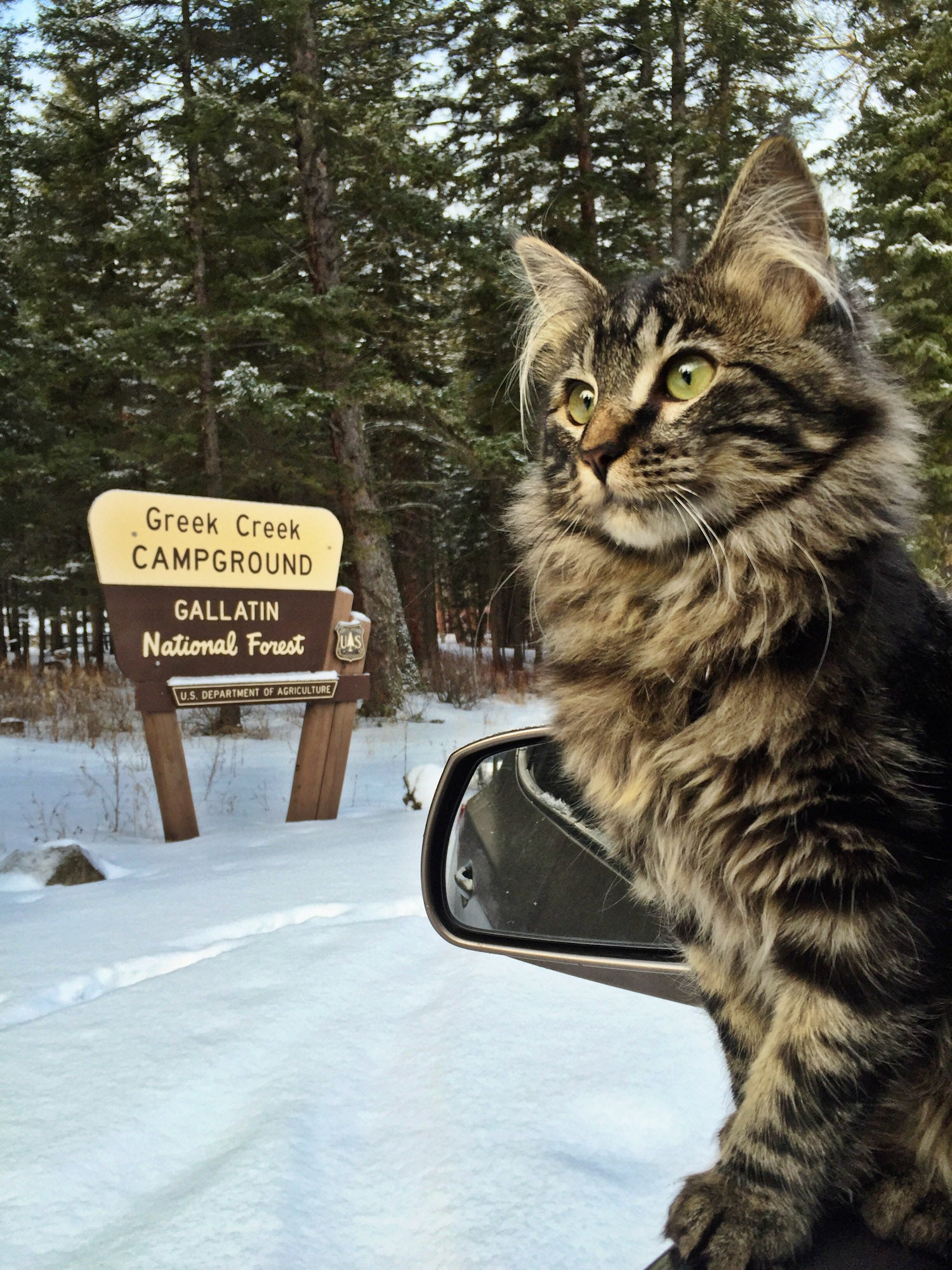 skiing with cat