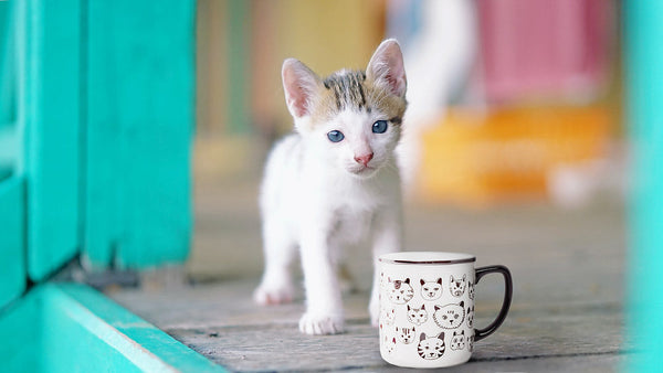 Cat with cute cat-themed coffee mug
