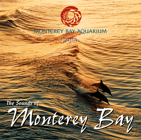 Dolphins surf a wave in Monterey Bay