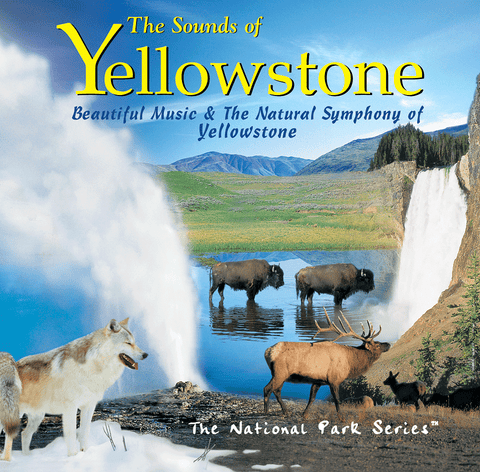 Photo collage of animals and landscapes in Yellowstone National Park