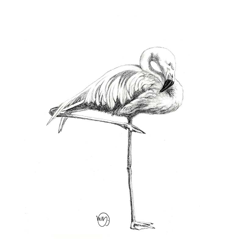 Art Print - Flamingo