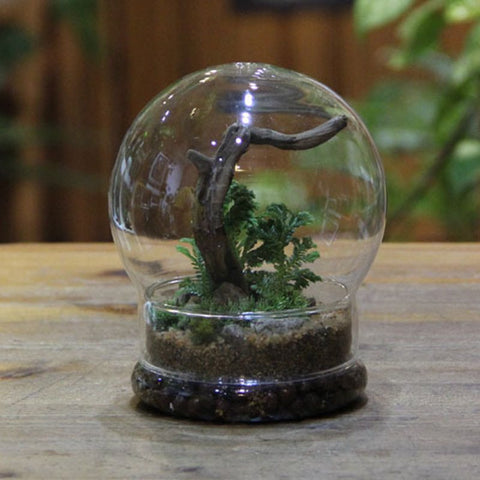 Christmas Terrarium Glass Flower Vase Sphere Tabletop Vases Home Wedding Decoration Transparent