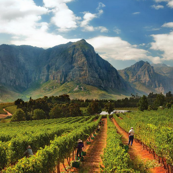 New Event: South Africa Wine Exploration