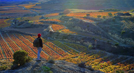 Rioja Vineyards at different elevations
