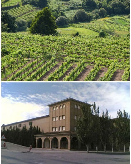 Coto de Hayas Vineyard and Bodega