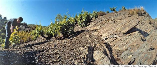 Priorat Vineyard