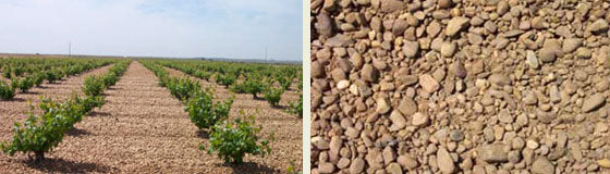 Rueda Soil and Vineyard