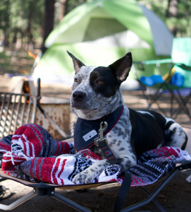 Things you Must Pack for your Dog this Camping Season