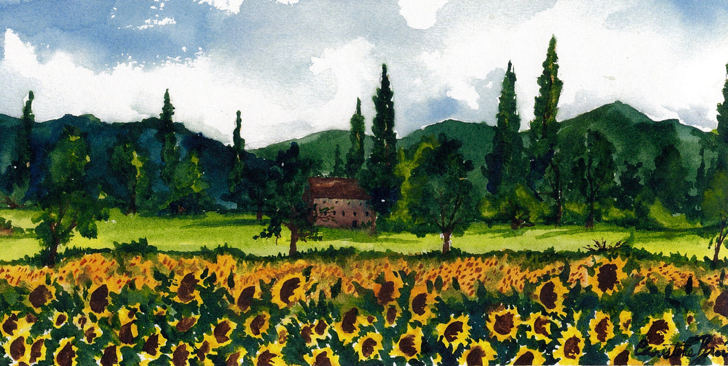 Sunflowers of Provence