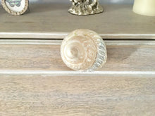 White Turbo Shell Drawer Pull