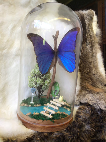 Giant Blue iridescent Morpho Terrarium - Totoro Themed