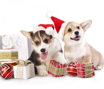 Giving the Gift of a Puppy This Christmas