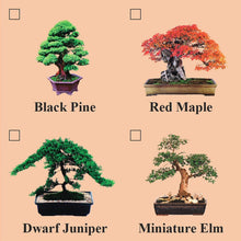 Eve's Dwarf Japanese Juniper Bonsai Seed Kit, Woody, Complete Kit to Grow Dwarf Japanese Juniper Bonsai from Seed