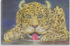 Image of Canvas Prints Wall Home Decor Real Art Paintings Leopard At Waterhole Sam Simonsen Artist
