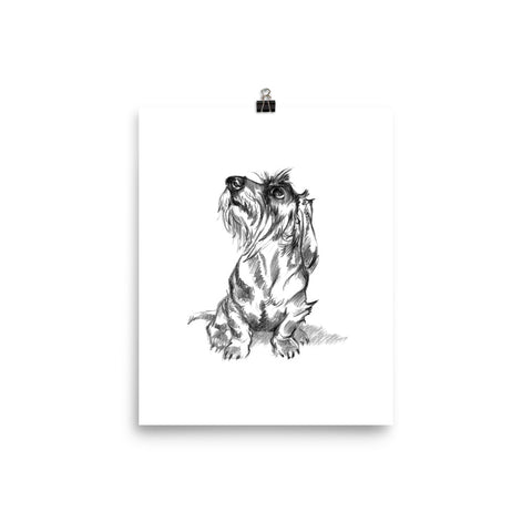 Wire Haired Dachshund Art Print • Matte Paper Poster • Art Print