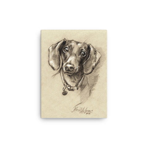 Dachshund Art Print Portrait • Canvas Print Of Original Drawing • Doxie-7