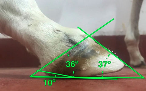 Image of FormaHoof ® Heel Extension