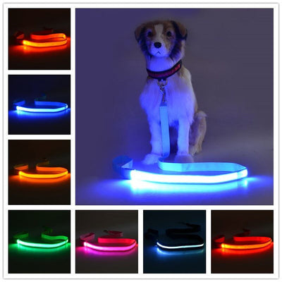 Flashing Dog Leash-USB Rechargeable
