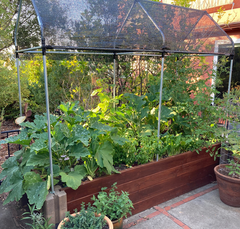 Raised garden bed with sun shade