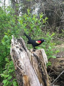Felt Red-winged Blackbird