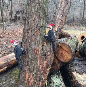 Felt Pileated Woodpecker