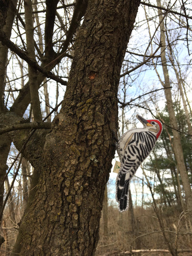 Felt Red Bellied Woodpecker