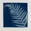 'Fern' cyanotype by Karen Jones, artist and maker
