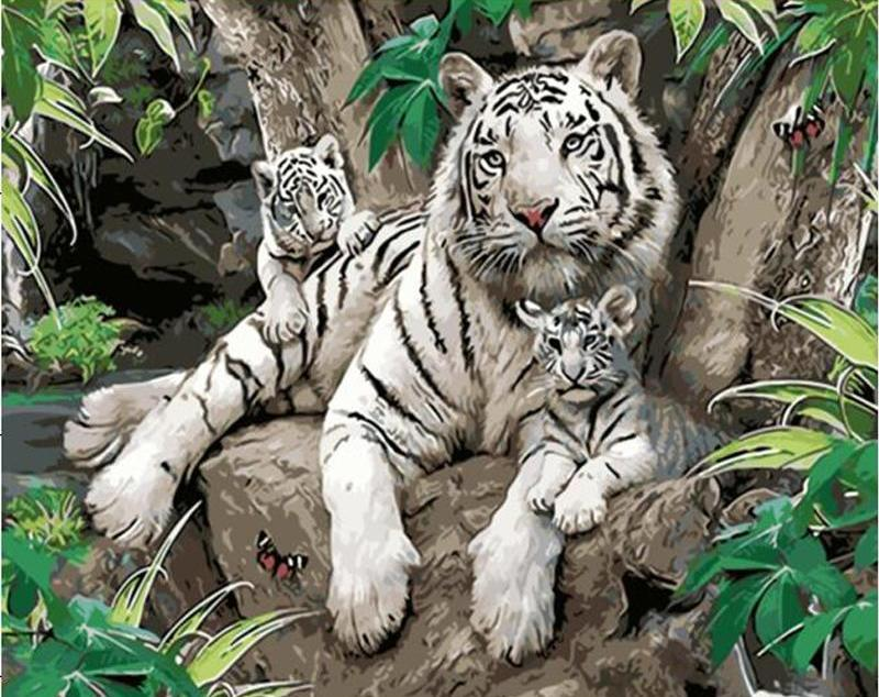 DIY Painting By Numbers - White Tigers (16