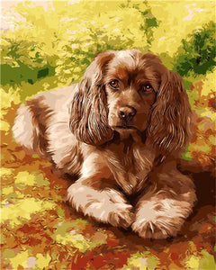 "DIY Painting By Numbers - Cavalier King Charles Spaniel (16""x20"" / 40x50cm)"