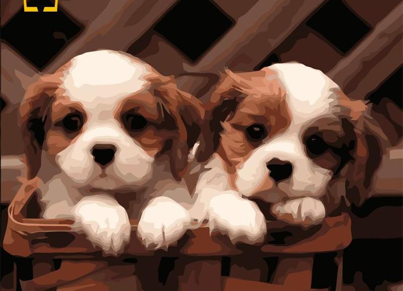 DIY Painting By Numbers - Cute Puppies (16