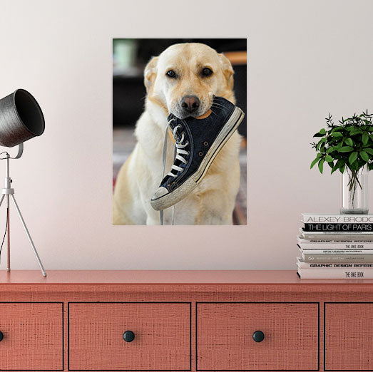 "10"" x 14"" Photos on Glass, dog with shoe in mouth from Tiny Quail"