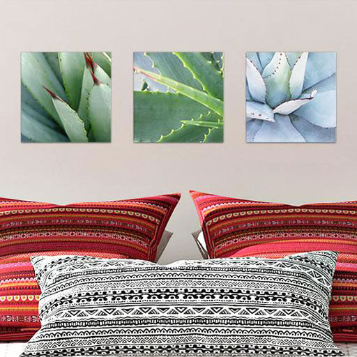 Three Piece Succulents Glass Photo Wall Art Collection From Tiny Quail
