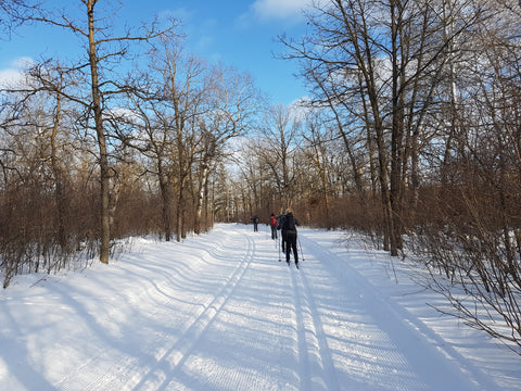 women cross country skiing at Birds Hill park under a blue sky surrounded by trees