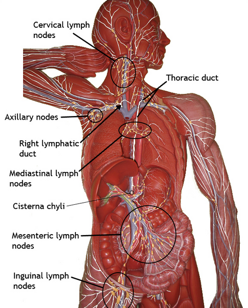 Lymphatics in disguise