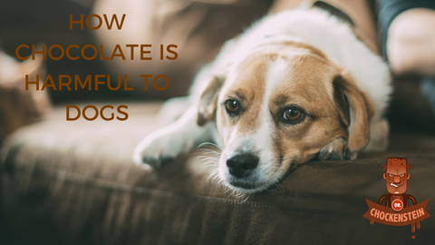 HOW CHOCOLATE IS HARMFUL TO DOGS