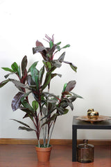 "59.75"" Decorative Potted Artificial Brown Red and Green Dracaena Plant"