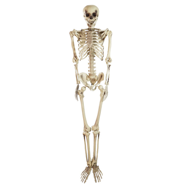 5' Spooky Life Size Skeleton Indoor/Outdoor Halloween Decoration
