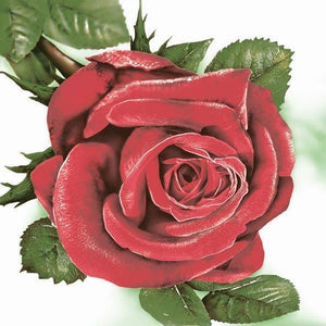 Cocktail Napkin - Big Red Rose (Collection: SLOG 0230 01)