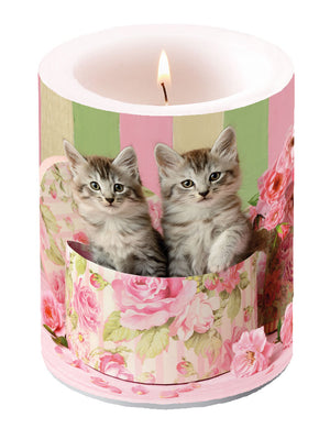 Candle LARGE - Cats in Box - COLLECTION