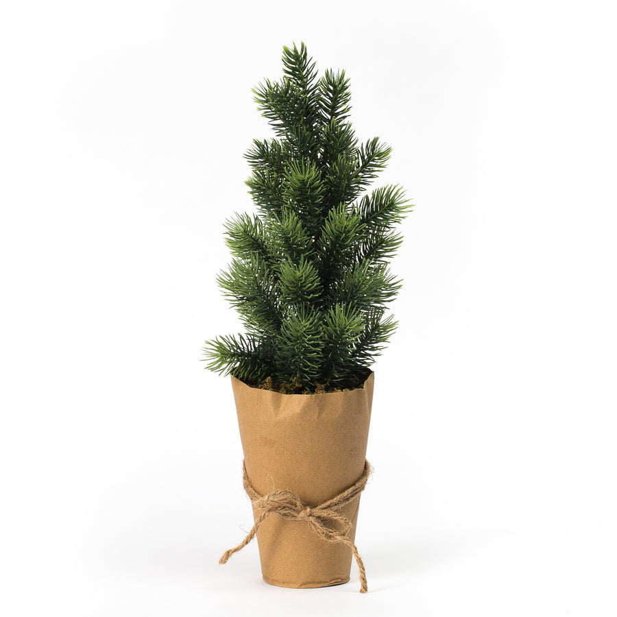 Evergreen Tree in Kraft Paper Pot, Large