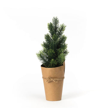 Evergreen Tree in Kraft Paper Pot, Small