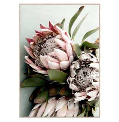 King Protea Blue