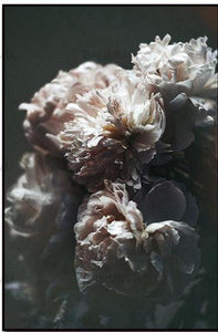 Peonies in Bloom - Unframed