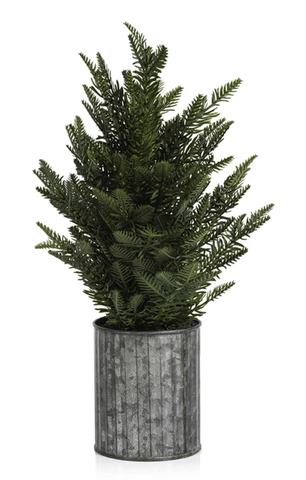 Pine in Galvanized Pot