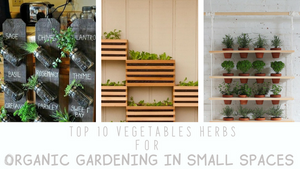 Top 10 vegetables & herbs for organic gardening in small spaces.