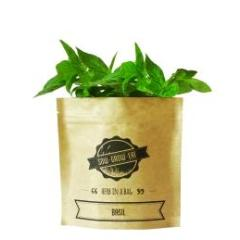 Herb In A Bag - Basil - Wholesome Habitat