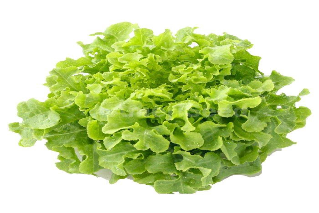 Certified Organic Green Oak Lettuce Each