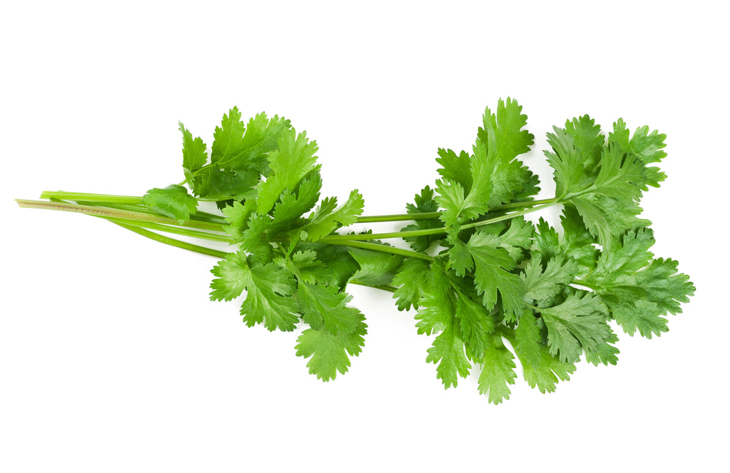 Certified Organic Coriander Bunch