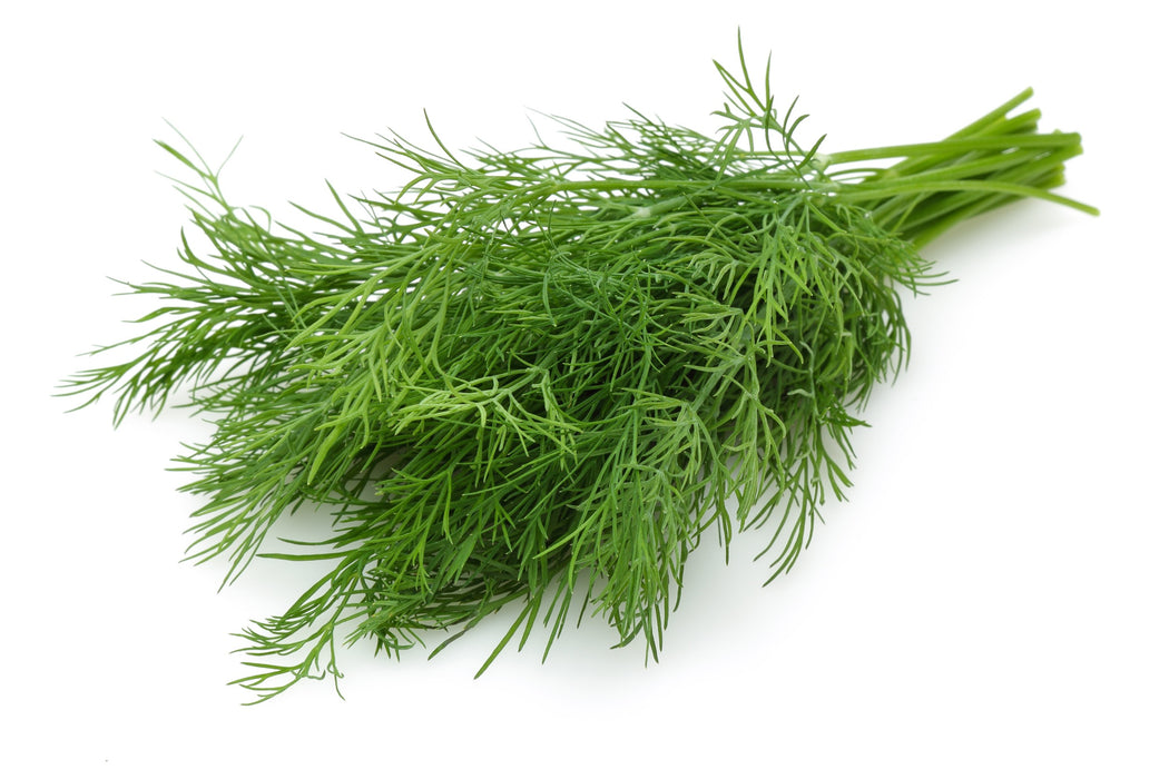 Certified Organic Dill Bunch