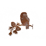 *W4256F/M  Saw-whet Owl on Pine Branch F/M